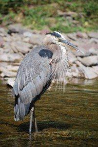 Homestead Farm Resort Wildlife